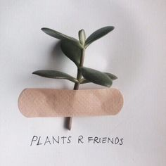 *cuts off part of a plant* *sticks it onto paper, which is made of plant* PLANTS ARE FRIENDS