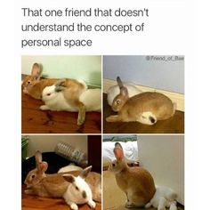 13 Fresh and Funny Animal Memes