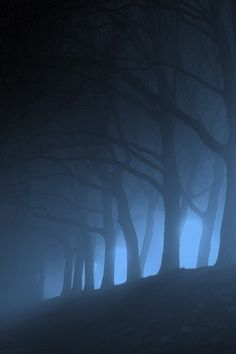 62 Super ideas for photography dark forest scary Tree Forest, Foggy Forest, Misty Forest, Forest Hill, Foto Art, Dark Art, Dark Side, Mists, Nature Photography