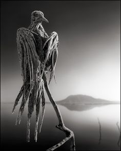 Calcified Caped Dove, Lake Natron, 2010 | Nick Brandt