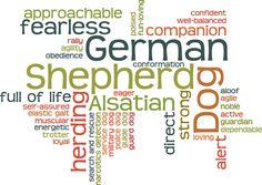 The German Shepherd Dog <3
