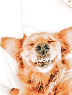 Super Cute Puppies, Cute Baby Dogs, Cute Little Puppies, Super Cute Animals, Cute Dogs And Puppies, Cute Little Animals, Cute Funny Animals, Doggies, Pics Of Cute Dogs