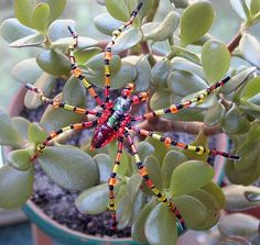 How to Make Beaded Bugs   our best to find beads to make a close replica