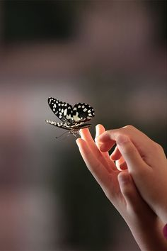 Do you like photography, but find yourself lacking motivation? If so, then you are likely to need new inspiration. Inspiration is the driving force behind… Types Of Butterflies, Beautiful Butterflies, Beautiful Birds, Girly Pictures, Beautiful Pictures, Nice Photos, Belle Tof, Image 3d, Hand Photography