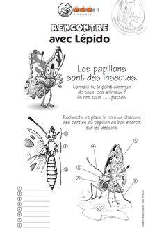L'élevage de papillons : un fichier élève complet pour chaque cycle avec des jeux, des exercices, des documentaires et des illustrations pour étudier les papillons et les insectes pollinisateurs.