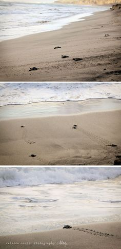 Watch baby sea turtles hatch and plunge into the ocean.