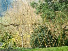Willow Screens are Natural Partitions