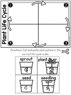 Plant Life Cycle & Needs Science Activities Folder English Activities For Kids, Preschool Science Activities, Kindergarten Science, Tree Life Cycle, Cycle For Kids, Plant Lessons, 1st Grade Math Worksheets, Life Cycles, Planer