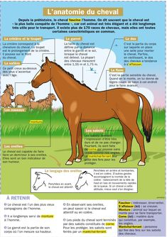 French vocabulary: horse anatomy   Le cheval