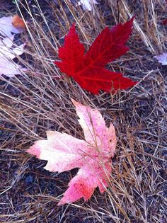Parksville Fall-en Leaves by Parksville and Qualicum Beach, via Flickr (Vancouver Island, BC)