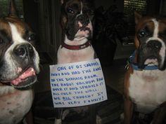 Dog shaming...