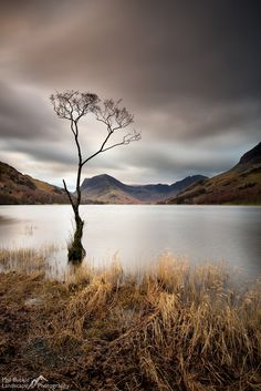 Buttermere Lone Tree Dawn - Long exposure of the Lone tree on the shores of Buttermere in the Lake District  www.philbucklephotography.co.uk