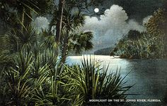 Moonlight on the River, St. Johns River, Florida