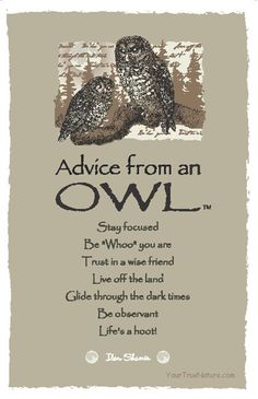 Spirit Totem Animals:  #Advice from an #Owl.