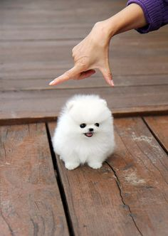 Snowball With Feet