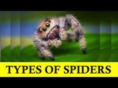 Itsy Bitsy Spider - Baby Einstein - Types of Spiders - YouTube