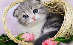 big cats and flowers images - Google Search