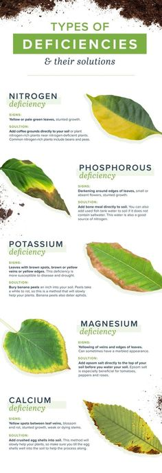 Gardening For Beginners homemade plant food and plant deficiencies - Sometimes plants get hungry after it's used up all its soils nutrients. Thankfully, you can make homemade plant food to keep your plant happy and healthy! Garden Types, Garden Care, Container Gardening, Gardening Tips, Organic Gardening, Gardening Gloves, Indoor Gardening, Vegetable Gardening, Compost Container