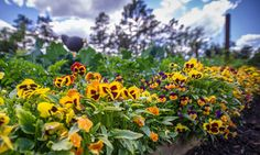 Save room for flowers in your fall vegetable garden!