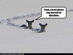 hilarious deer hunting pictures - Google Search