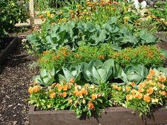 Таблица как спланировать смешанные посадки овощей. » Женский Мир