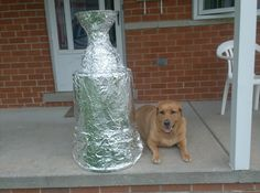 Cool! Twitter follower @BriannaYankasky named her dog after Stevie Y! #hockeypets