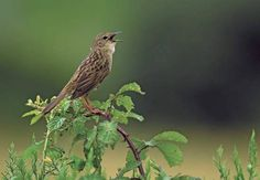 Could birdsong help us solve stuttering?  Think that sparrow whistling outside your bedroom window is nothing more than pleasant background noise?  A new paper from a researcher at MIT's Computer Science and Artificial Intelligence Laboratory (CSAIL) suggests that we can apply what we know about songbirds to our understanding of human speech production — and, therefore, come closer to identifying and potentially even reducing the prevalence ...    http://bit.ly/13B1mae