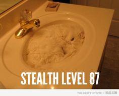 kitty cats, camo, geek humor, ninja, funny humor, computer humor, white cats, sink, tech humor
