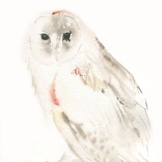 Owl Painting - Original Watercolor of a Barn Owl. $80.00, via Etsy.