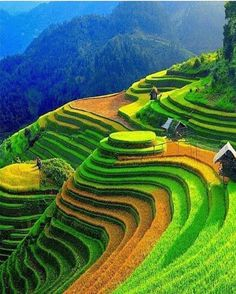 Rice terraces, Vietnam