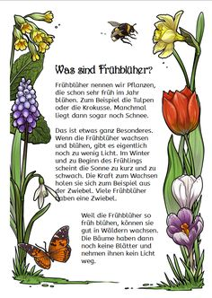 This complete package contains everything about early bloomers in elementary school: almost 50 cliparts, 25 … - Grundschule Primary School, Elementary Schools, Amazing Gardens, Beautiful Gardens, Thing 1, Montessori Materials, Spring Activities, Science, Play To Learn