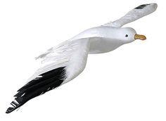Fake Flying Seagull - 35 x 75cm