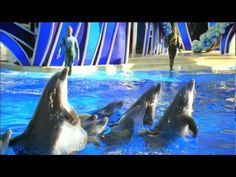 Blue Horizons at SeaWorld Orlando