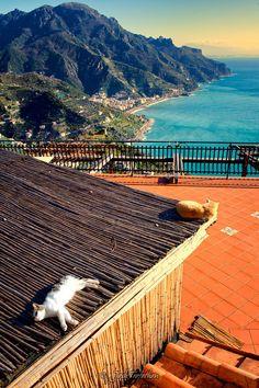 Life is goooood : Italy - Josh Trefethen