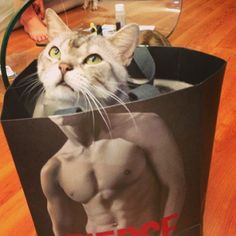 Area Cat Finds Shortcut to Six Pack Abs