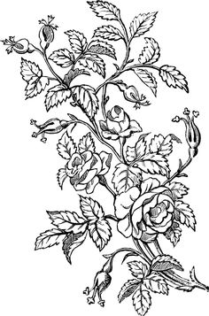 12 French Ornaments with Flowers! - The Graphics Fairy Design Rosa, Rose Design, Black And White Flowers, Black And White Drawing, Floral Embroidery Patterns, Flower Patterns, Adult Coloring Pages, Coloring Books, Colouring