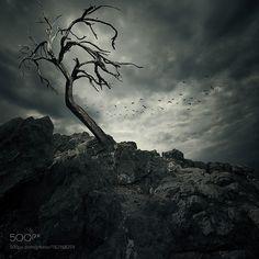 Tree by tothzoli001. @go4fotos