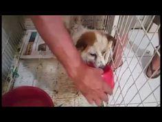 Robert ingresó a ANIMAL HELP URUGUAY el 1.2.17, fue mordido y tiene lesi...