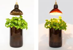 Recycled bottles turned into lamps and vases! #green