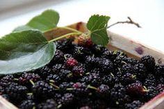 Natural Preserves & Jams using honey, minimal sugar and natural pectin.