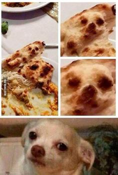 22 Funny Animal Pictures Of The Day - Funny Animals - Daily .- 22 Funny Animal Pictures Of The Day – Funny Animals – Daily LOL Pics 22 Funny Animal Pictures Of The Day - Funny Animal Jokes, Funny Dog Memes, Crazy Funny Memes, Really Funny Memes, Funny Animal Pictures, Stupid Funny Memes, Funny Relatable Memes, Haha Funny, Funny Animals