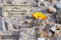 Photo by: Coreen Kuhn Quote by: Thomas Carlyle Location: Springbok #inspirational #coreenkuhnphotography #travelphotography #flowerphotography #thomascarlyle #quoteoftheday