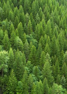 Forest of green. Trees are, of course, the perfect representation of Wood.