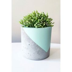 Limited number of pots available for only $25!!! Visit belushihandmade.bigcartel.com for more. And only $5 shipping!!! #concrete #homewares #handmade #planters #concretehomewares #concretelove #concreteplanters #planters #succulents #cactus #pots by belushihm