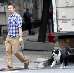A border collie has an Ethan Hawke