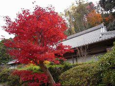 葛城一言主神社@御所市-17 by small-life.com, via Flickr