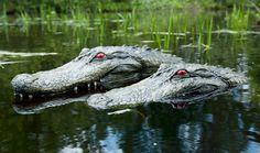 Gator Pond/Pool Float
