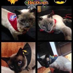 Consulta fotos y vídeos de Instagram de Full Cat & Dog de Colombia (@fullcatdecolombia)
