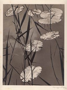 Water Lily Pond-Erich Angenendt 1894-1962