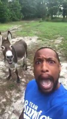 Aaaaahhhh signnayyaaa mamaabbbiii - Horses Funny - Funny Horse Meme - - Lol I couldnt stop laughing! The post Aaaaahhhh signnayyaaa mamaabbbiii appeared first on Gag Dad. Animal Jokes, Funny Animal Memes, Cute Funny Animals, Funny Animal Pictures, Cute Baby Animals, Funny Cute, Funny Horse Memes, Hilarious, Funny Images